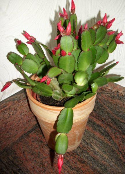 cactuspaques1.jpg